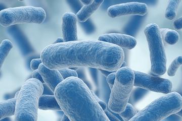 Computer generated image of legionella bacteria