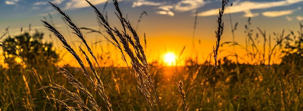 sun set over a corn field