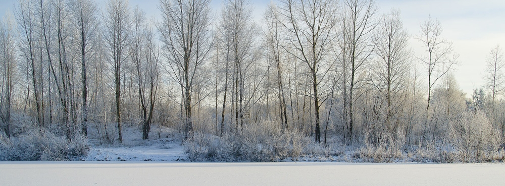 frozen snowy lake with trees behind